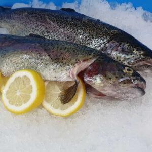 Lachs Forelle ausgenommen – 600/900