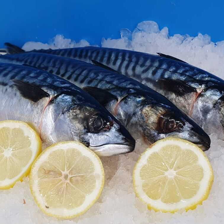 Makrele-online-bestellen
