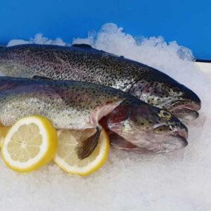 Weisse-Forelle-online-kaufen